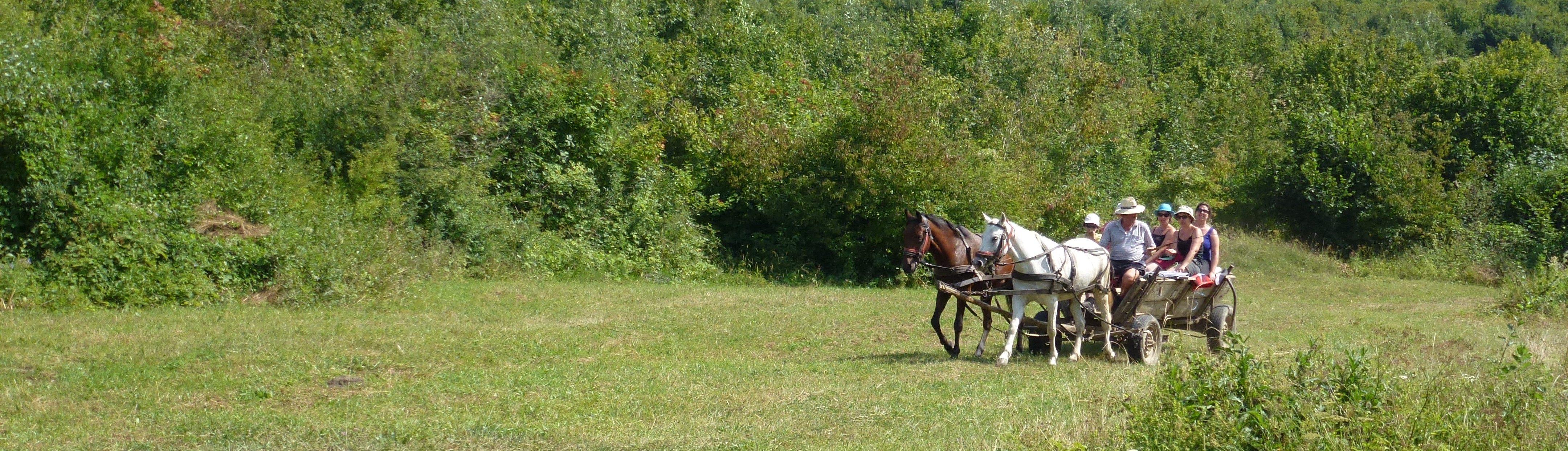 Balade en charette dans la vallée de Pucareni, Carpates, Transylvanie, Roumanie