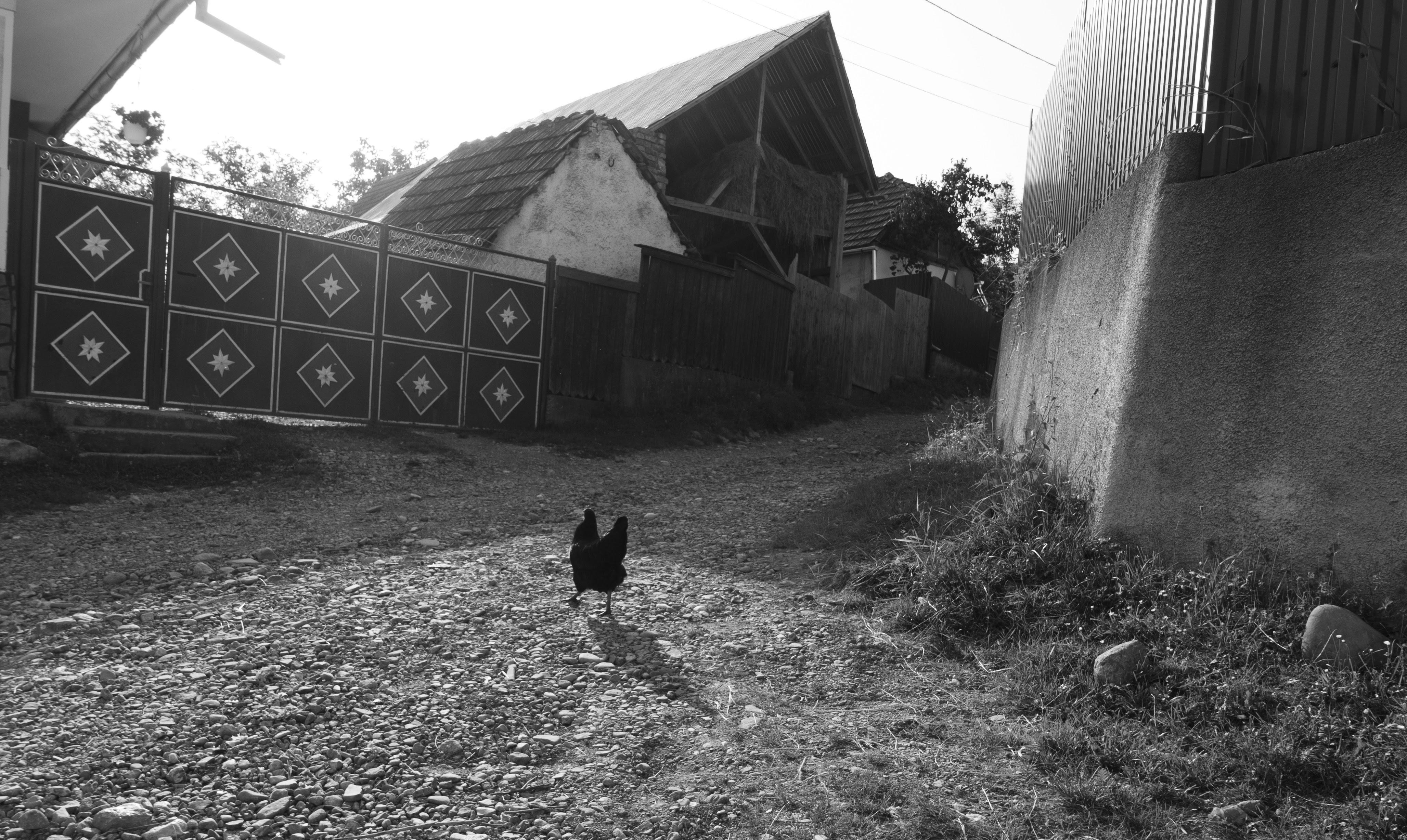 Dans les rues de Purcareni / In the streets of Purcareni
